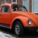 Jeans Beetle
